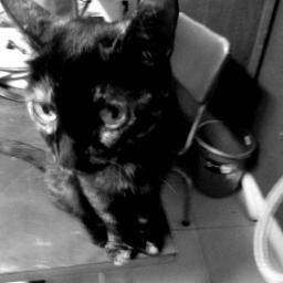 I Met a Cat. I Named Him Myshkin.