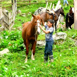Riding Horses in Colombia